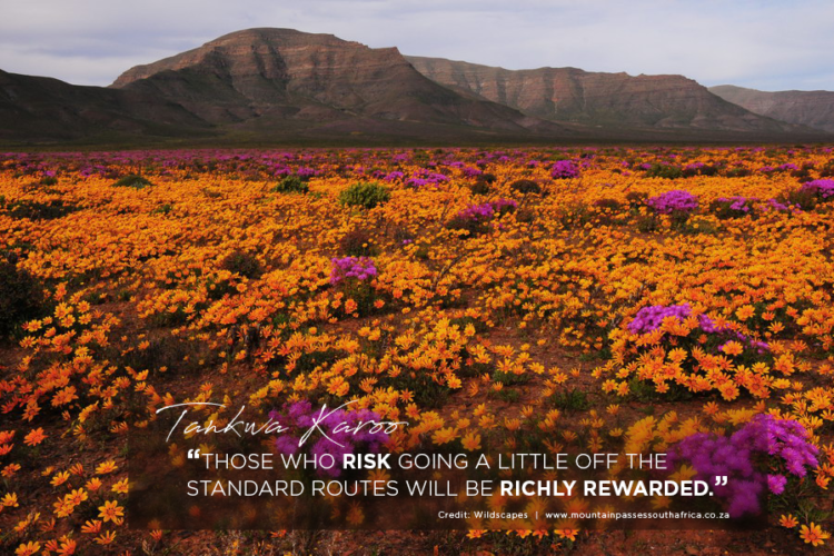 Tankwa Karoo - landscape with wildflowers and mountain - Credit: Wildscapes